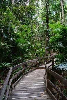Daintree Rainforest 2