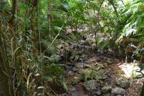 Daintree Rainforest 3