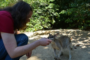 Feeding a wallaby at Lync Haven