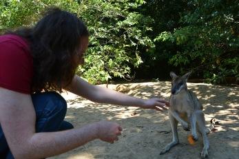 Feeding wallaby sweet potato