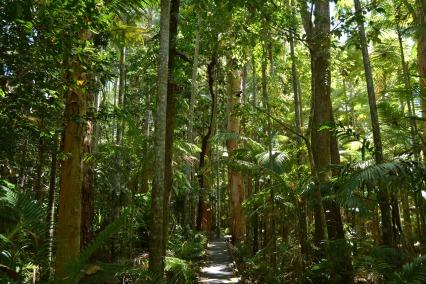 Flecker Botanic Gardens Rainforest