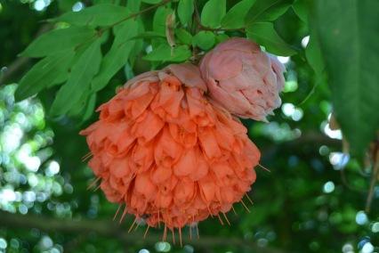 Flowers Botanic Garden Cairns 1