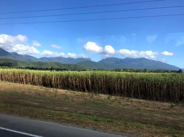 Captain Cook Highway en route to Daintree - Sugarcane