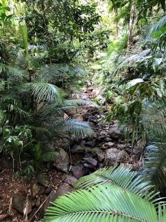 Daintree Rainforest 4