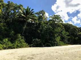 Cape Tribulation vegetation