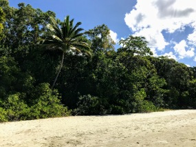 Cape Tribulation vegetation