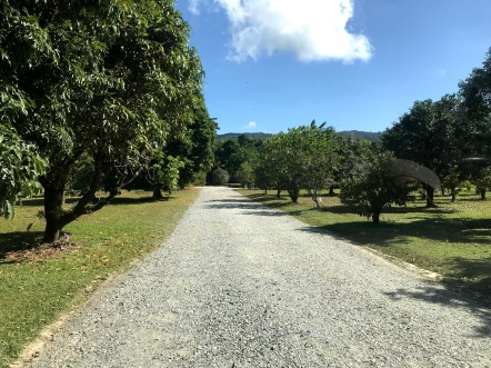 Daintree Ice Cream Company entrance path