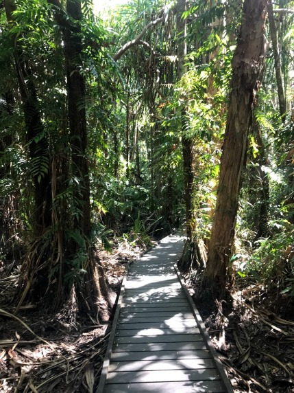 Rainforest boardwalk Flecker Botanic Gardens Cairns