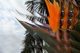 Bird of Paradise Royal Botanic Gardens