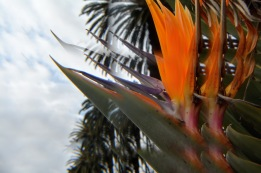 Bird of Paradise Royal Botanic Gardens