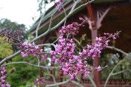 Blooming flowers Royal Botanic Gardens