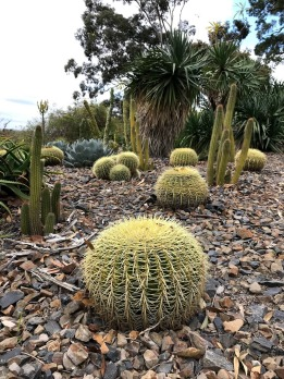 Cacti Royal Botanic Gardens Melbourne