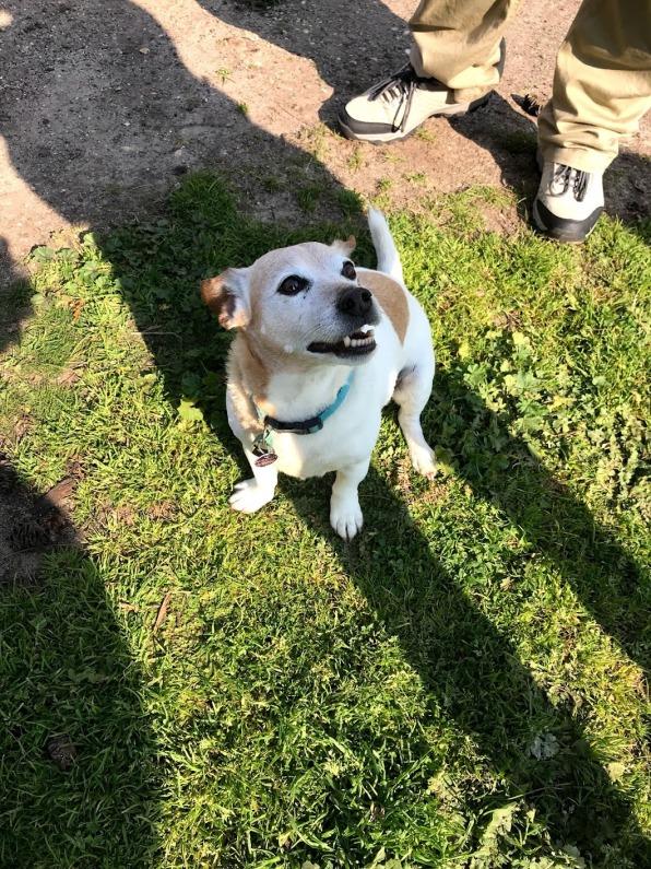 Cute happy dog at Torquay
