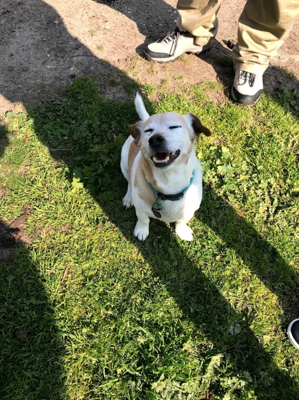 Cute smiling dog at Torquay