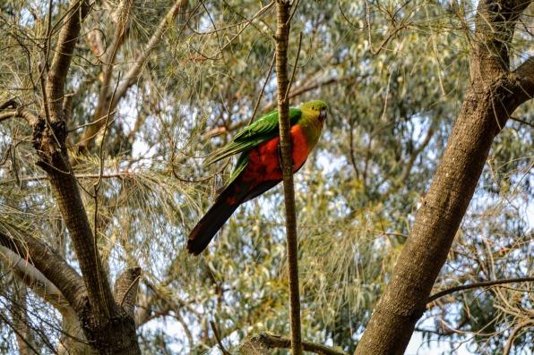 Kennett River Bird 2