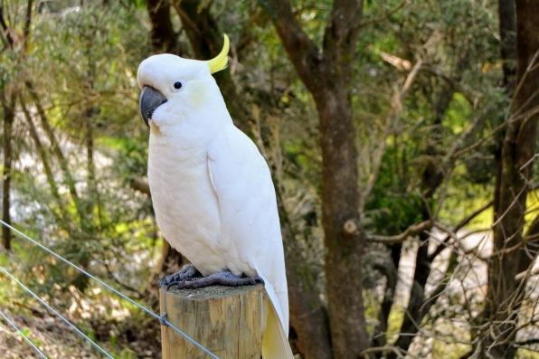 Kennett River Bird