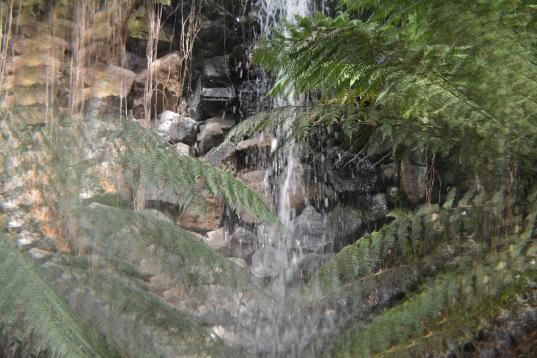 Trippy Waterfall Royal Botanic Gardens