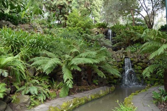 Waterfall Ferns Royal Botanic Gardens