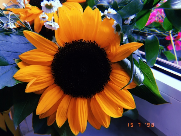 Sunflower at Hotel Excelsior
