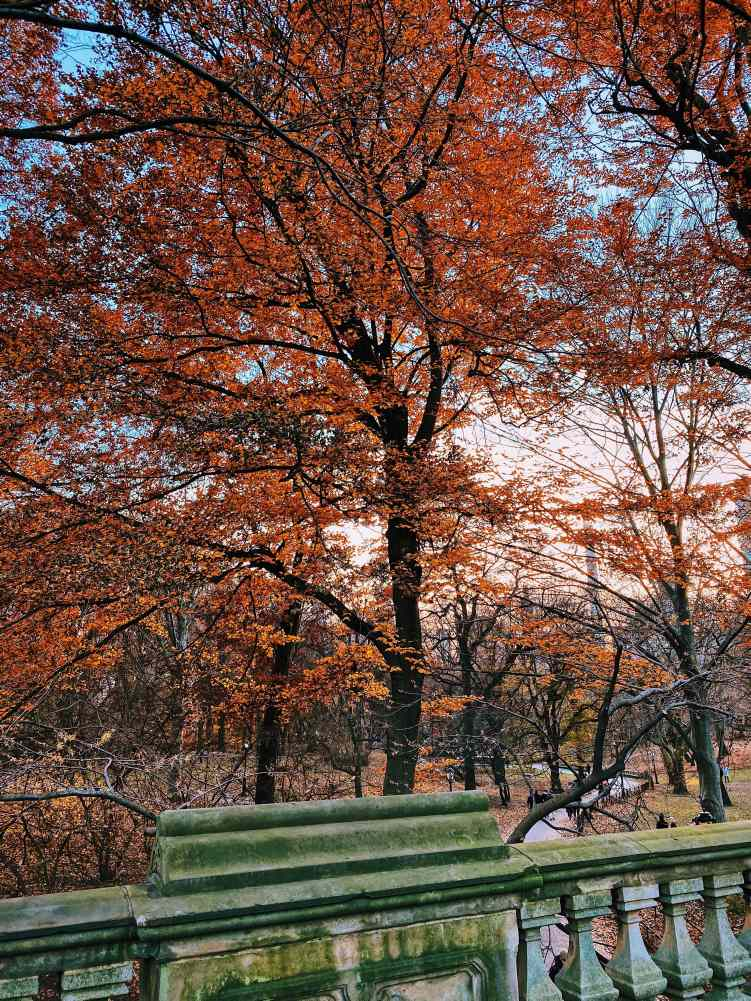 Autumn Leaves in Central Park-min