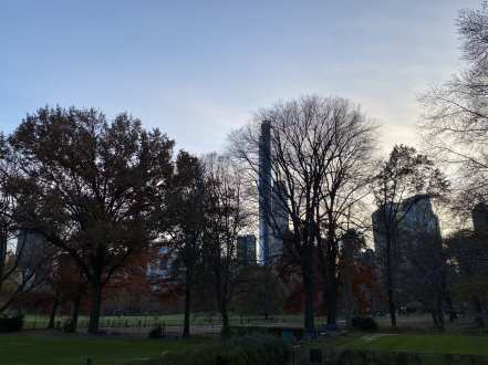 Central Park - bare trees and skyline-min