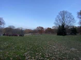 Central Park tress hill-min